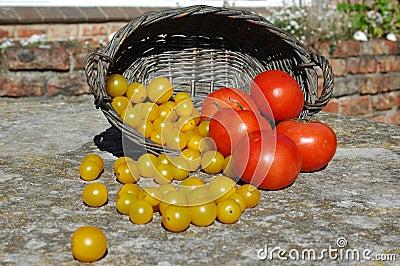 Basket of ripe tomatoes