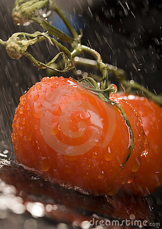 Free Tomatos Stock Photos - 2321233