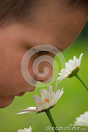 Tome o tempo apreciar as flores