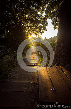 Free Toned Photo Of Sun Beam Shining On Wooden Path At Forest Royalty Free Stock Images - 46914879