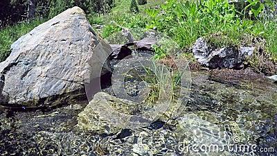 Toneelstroom in de bergen Gras en bloemen op de bank van de beek stock video