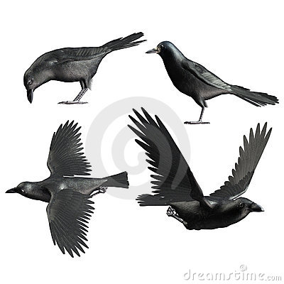 Toon crows