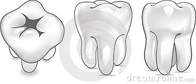 Tooth in 3 views