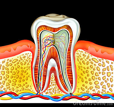 Free Tooth Stock Image - 5632521