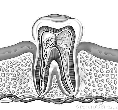 Free Tooth Stock Photography - 5632542