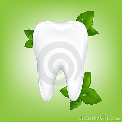 Tooth With Mint. Vector