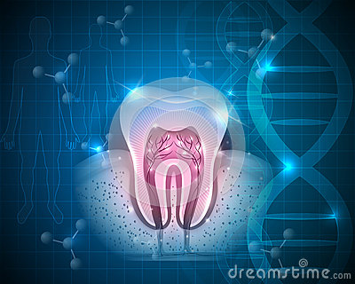 Tooth with roots Vector Illustration
