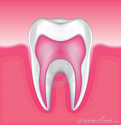 Tooth Set 4