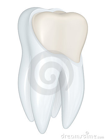 Tooth Structure Stock Illustration - Image: 46625318