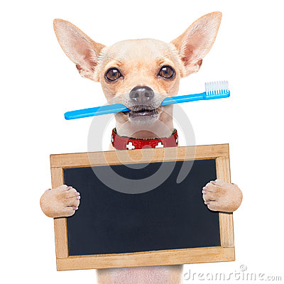 Free Toothbrush Dog Royalty Free Stock Photo - 50240265