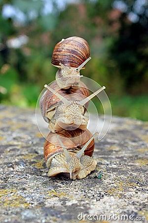 Top 3 snails