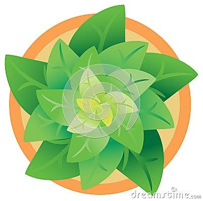 Top angle pot plant