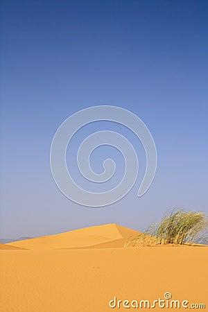 top of sand dune