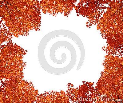 Top tree in autumn.