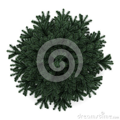 Top view of alpine fir tree isolated on white