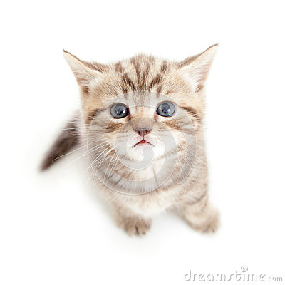 Top view of baby cat on white background