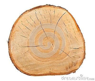 Top view of a birch stump