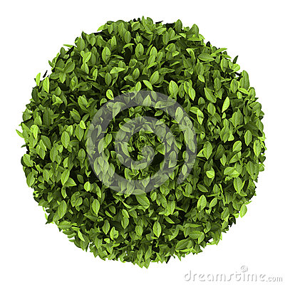 Top view of decorative round plant isolated
