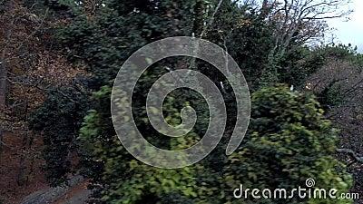 Top view mit dunkel dichten Herbstwald Shot Asphalt Straße läuft im Herbst durch dichten dunklen Wald Schöne Dunkelheit stock footage