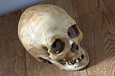 Top View Old Skull Royalty Free Stock Images Image