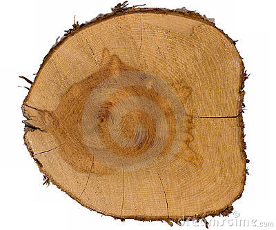 Top view of a tree stump