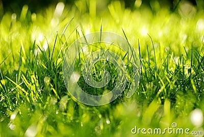 Topete da grama verde
