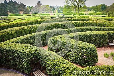 Topiary Maze