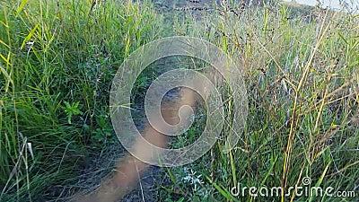Torkat gräs bredvid banan arkivfilmer