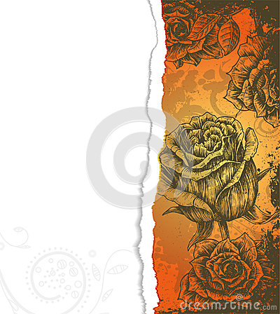 Torn cardboard with roses