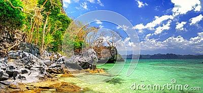 Torquoise tropics