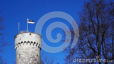 Torre histórica vieja masiva en Tallinn (Estonia) con una asta de bandera y la bandera que agita de Estonia en ella almacen de metraje de vídeo