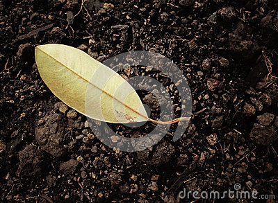 Torrt blad på jord