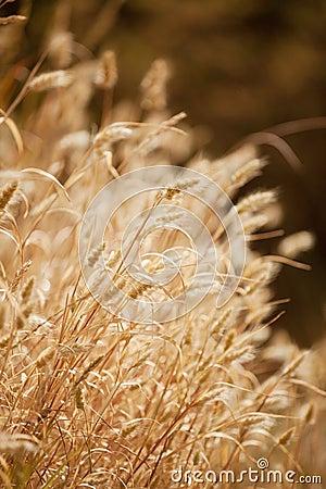 Torrt gräs