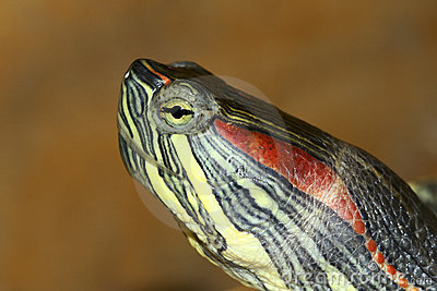 Tortoise Royalty Free Stock Photography - Image: 18683527