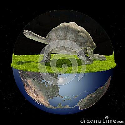 The tortoise.