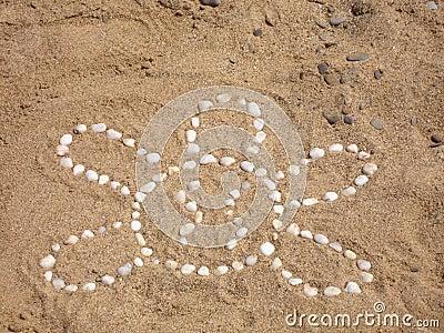 Tortoise on the beach