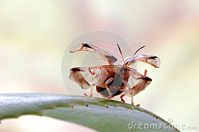 Tortoise Beetle Royalty Free Stock Photography - Image: 28598017
