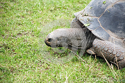 Tortoise On Grass