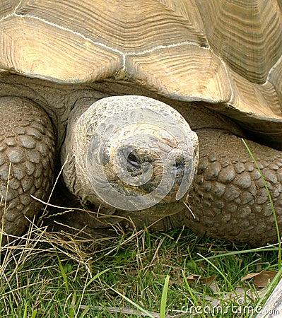 Tortoise Sans Hare