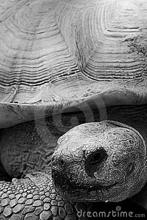 Tortoise At Wildlife World Zoo