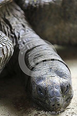 Tortoise 1