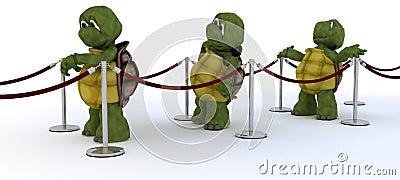 Tortoises waiting in line