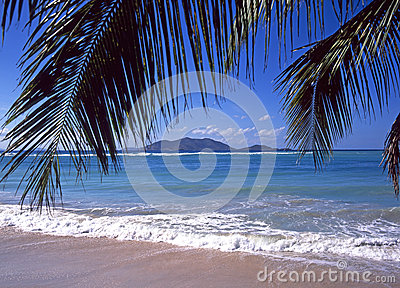 Tortola beach palm tree leaves