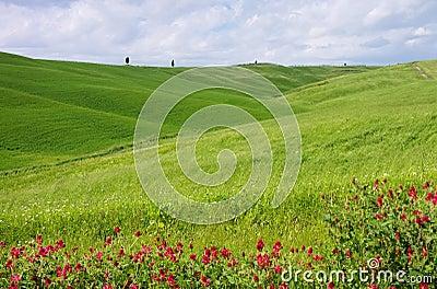Toskana-Feld und Zypressenbaum