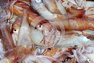Totena mediterranean squid seafood market