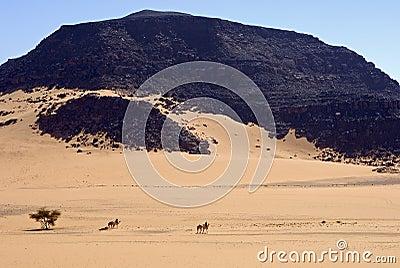 Touareg nomads crossing a vast desert
