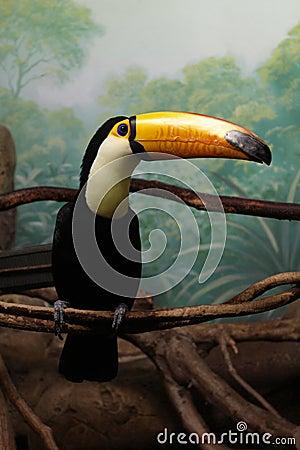 Toucan_bird