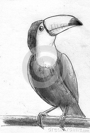 Toucan Bird Pencil Sketch Stock Illustration - Image 66173965
