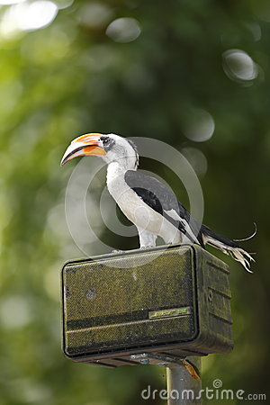 Toucan on box