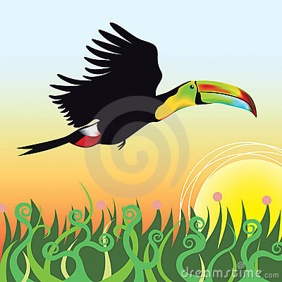 A Toucan flying into sunset